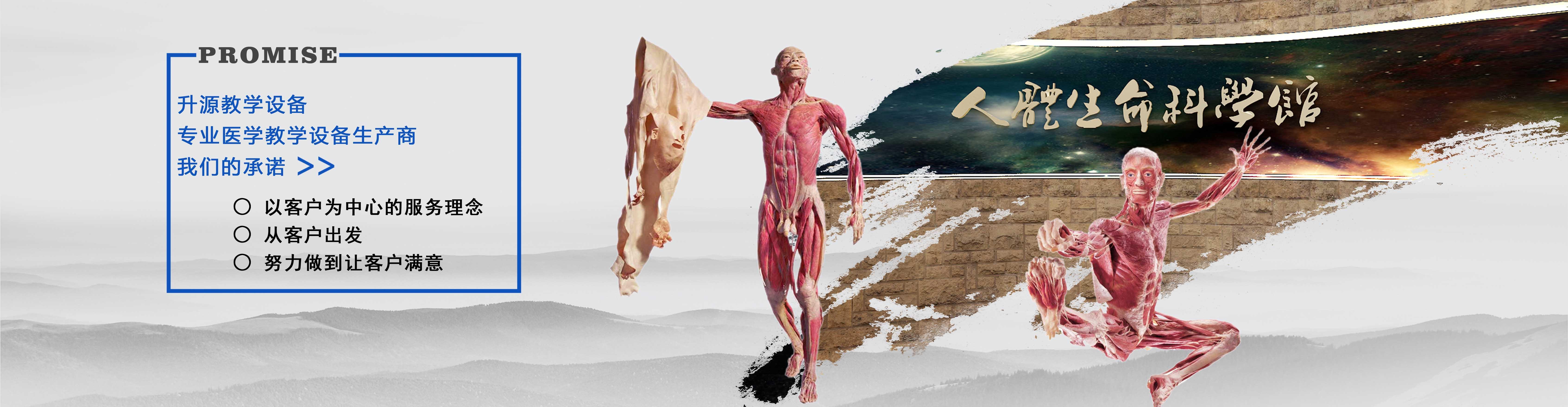 生物塑化标本
