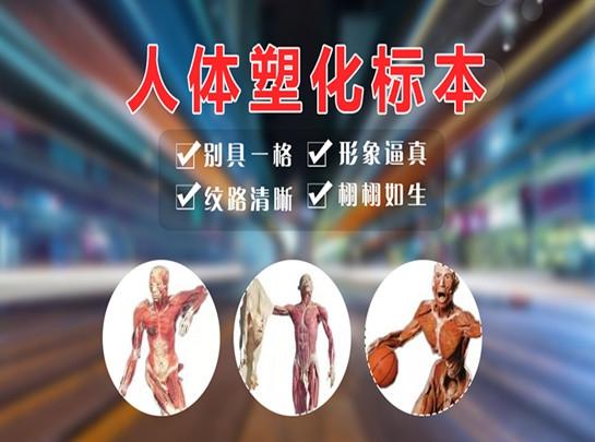 人体塑化标本