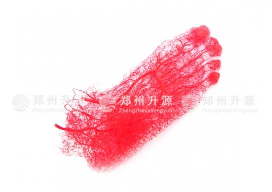 足动脉铸型标本