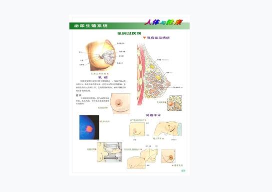 泌尿生殖系统